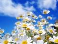 Primavera (2)