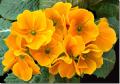 Primavera (4)