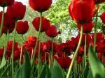 Primavera de haikus, relato breve y novela en Valencia